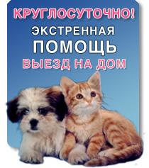 бесплатные консультации ветеринара