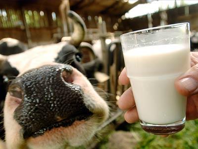 Производство молочных продуктов - выгодное вложение средств